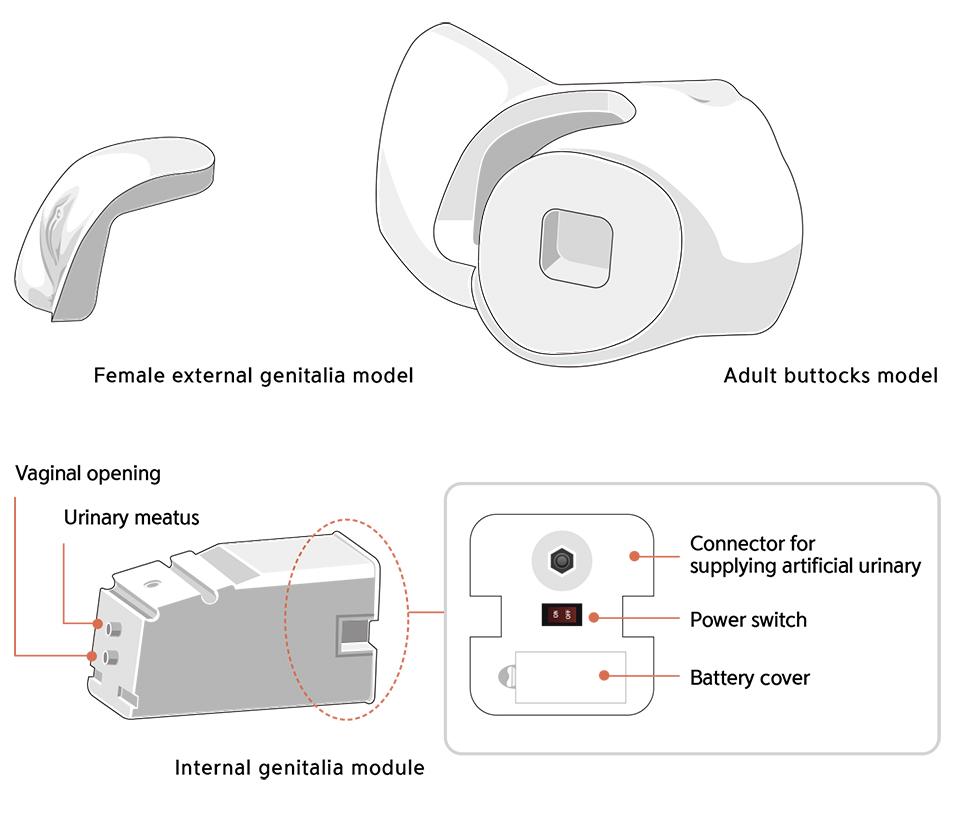 Modulo genitali per CSCF simulatore cateterizzazione vescicale femminile